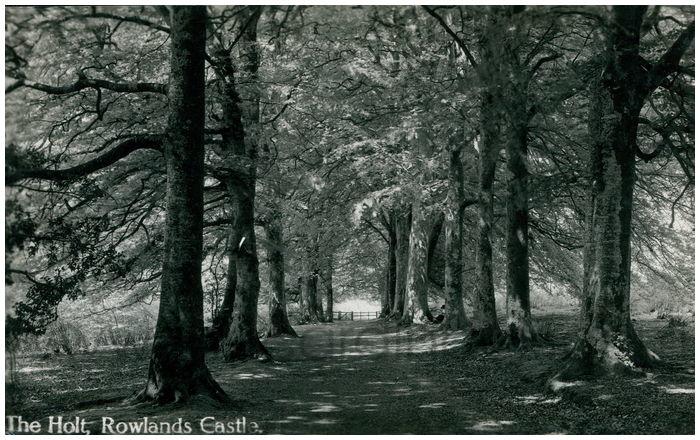Postcard front: The Holt, Rowlands Castle.