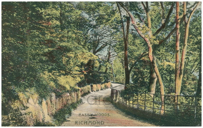 Postcard front: Easby Woods. Richmond.