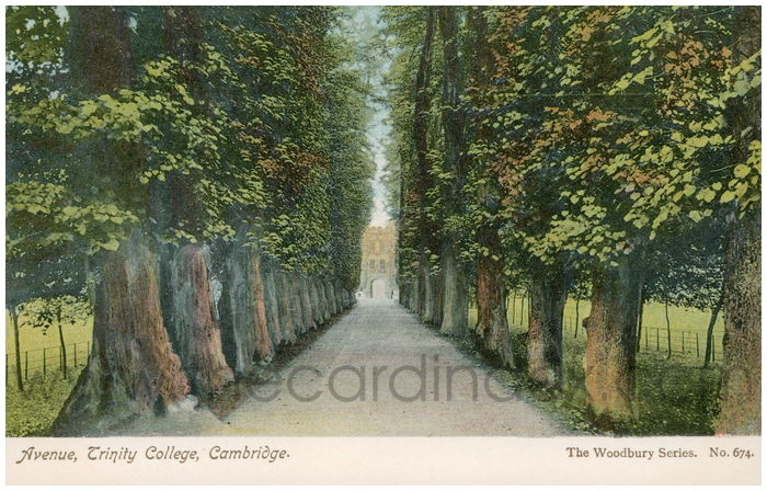 Postcard front: Avenue, Trinity College, Cambridge.