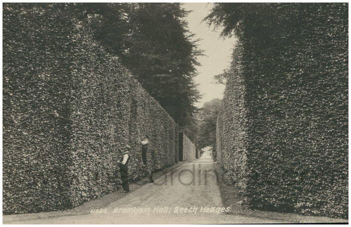 Postcard front: Bramham Hall; Beech Hedges.
