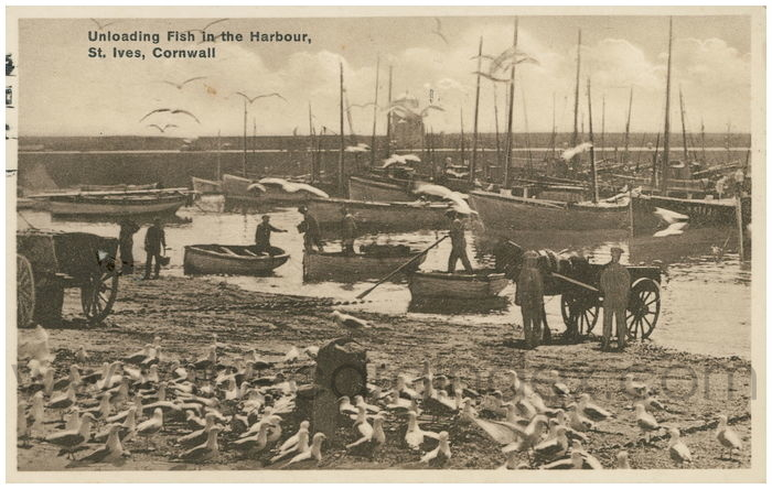 Postcard front: Unloading Fish in the Harbour, St. Ives, Cornwall
