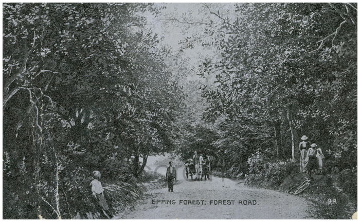 Postcard front: Epping Forest. Forest Road.