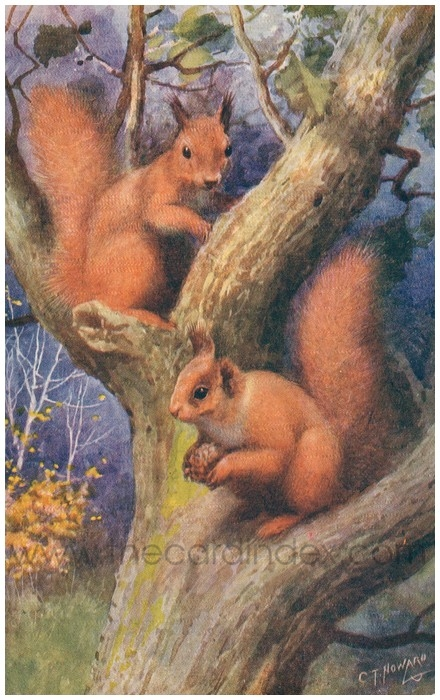 Postcard front: Squirrels