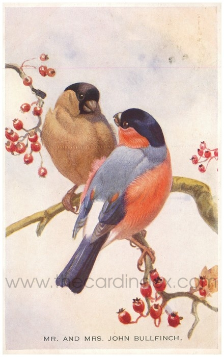 Postcard front: Mr. and Mrs. Bullfinch