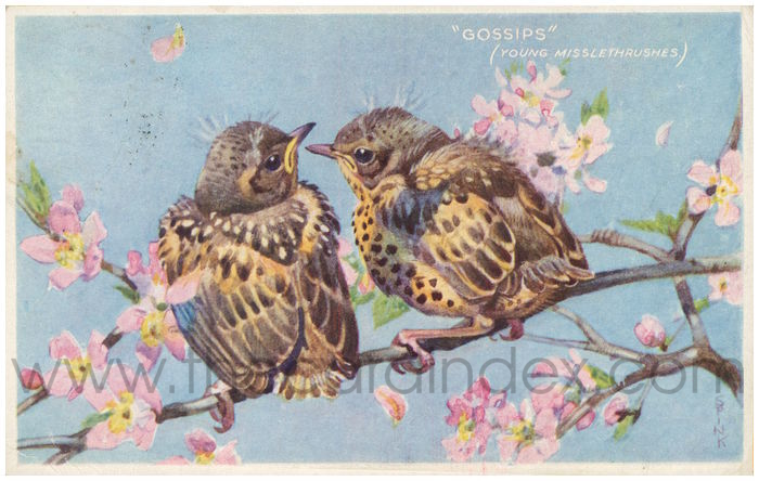 Postcard front: Gossips (Young Misslethrushes)