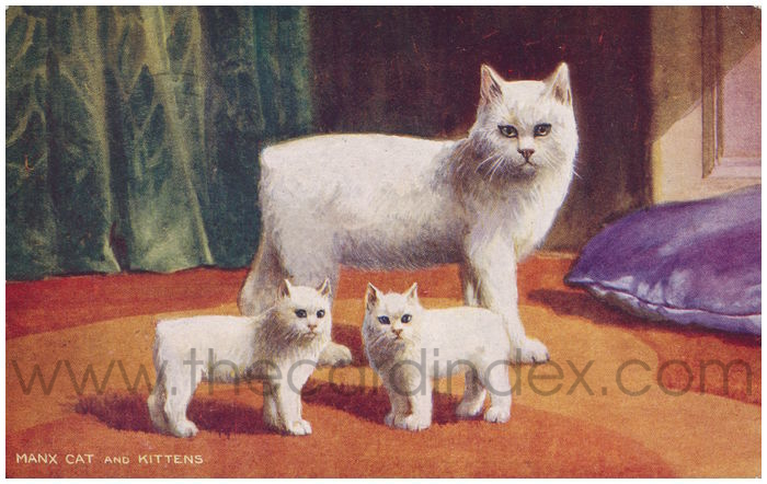 Postcard front: Manx Cat and Kittens