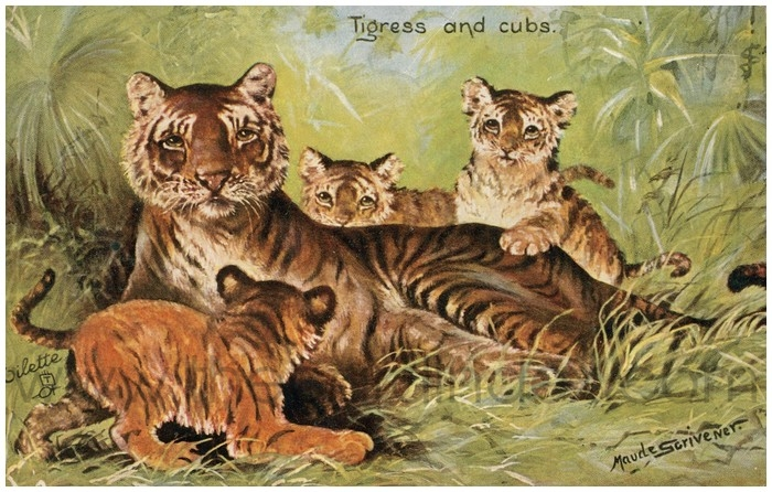 Postcard front: Tigress and cubs
