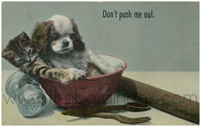Postcard front: Don't Push Me Out