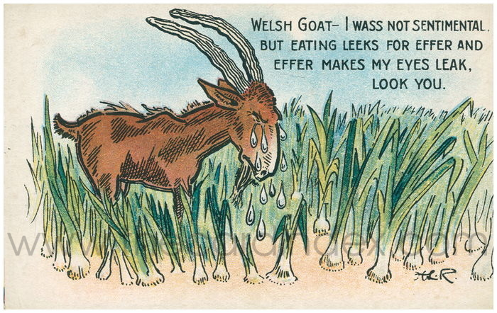 Postcard front: Welsh goat - I was not sentimental. But eating leeks for effer and effer makes my eyes leak, look you.