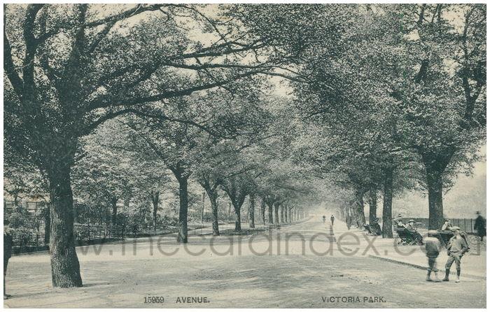 Postcard front: Avenue. Victoria Park