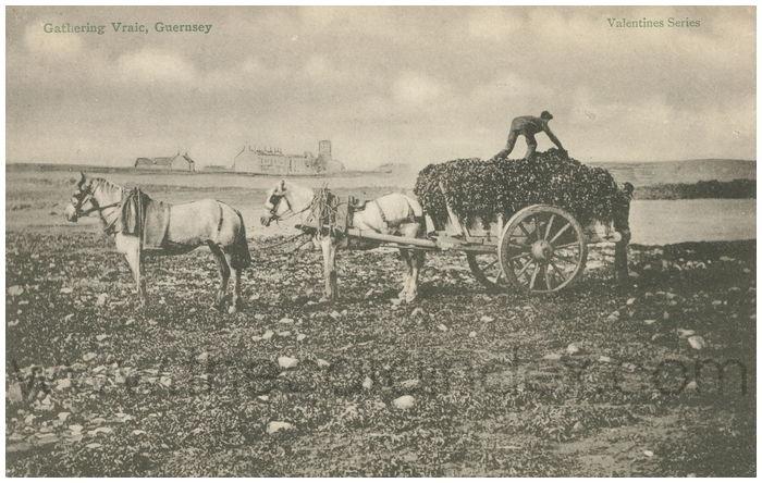 Postcard front: Gatherine Vraic, Guernsey
