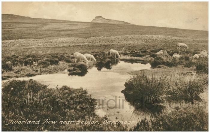 Postcard front: Moorland View near Heytor, Dartmoor.