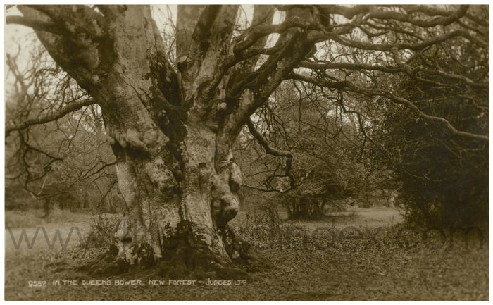 Postcard front: In The Queens Bower, New Forest