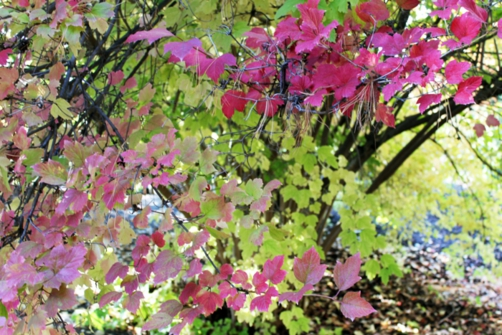 Leaves turning colors in fall.