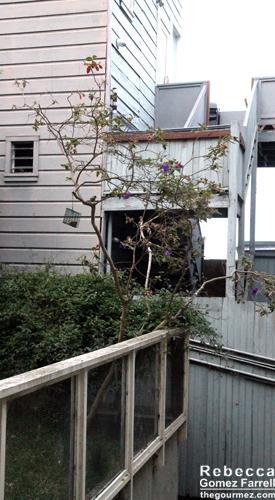 A peek at the neighboring yards.