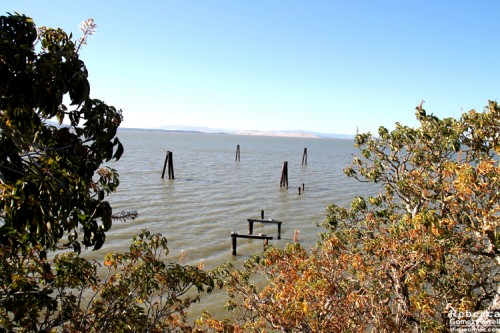 Abandoned pier at Buckeye Point.