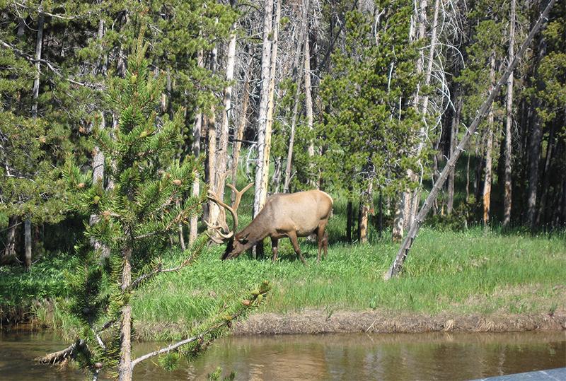 elk-hunting_1920