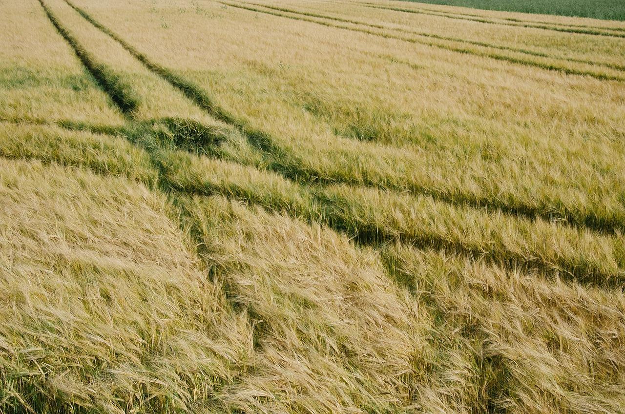 fields-691972_1280