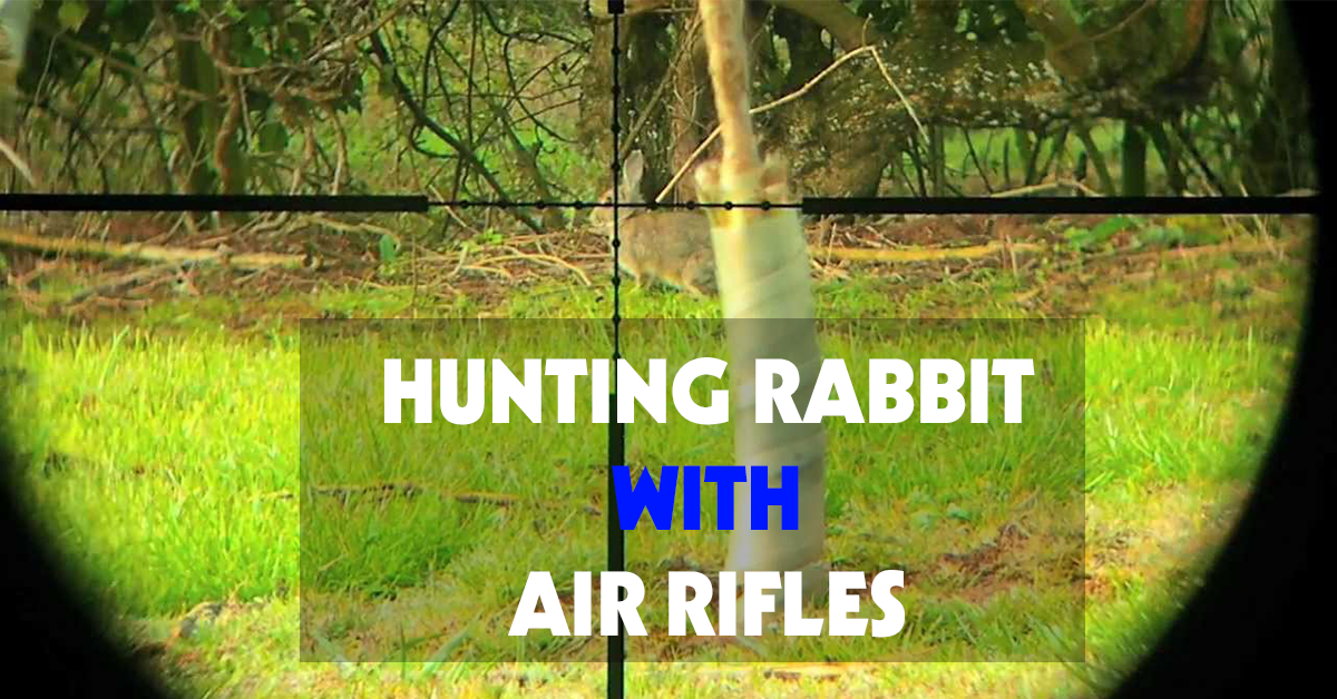 Hunting Rabbit With Air Rifles