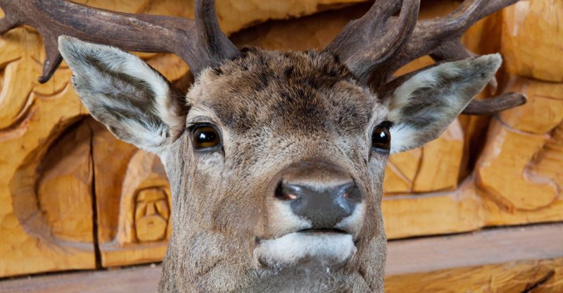 stuffed-deer-head