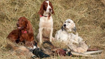 best-hunting-dogs-breed