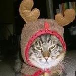 Catxmas
