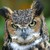 Greathornedowl_thumb