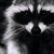Mapache_avatar_thumb