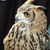 Owl_thumb