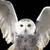 Hedwig_thumb