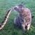 Catsnake_copy_thumb