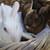 Bunnies__2__thumb