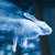 Rabbit_patronus_thumb