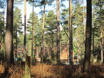 Normal_dh_set_swinleyforest10_05