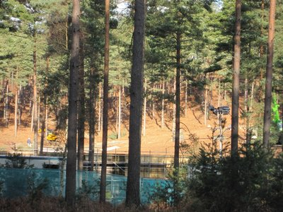 Normal_dh_set_swinleyforest10_06