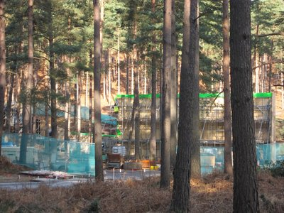 Normal_dh_set_swinleyforest10_09