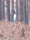 Thumb_dh_set_swinleyforest10_01