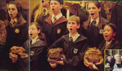 Normal_poa_frogchoir