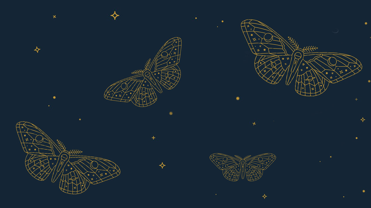 All These Wonders Moths