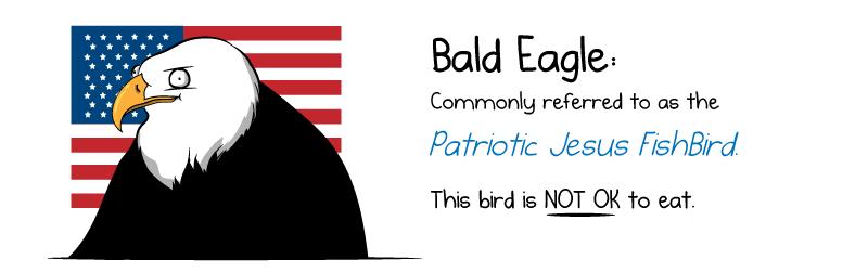[Image: bald_eagle.png]