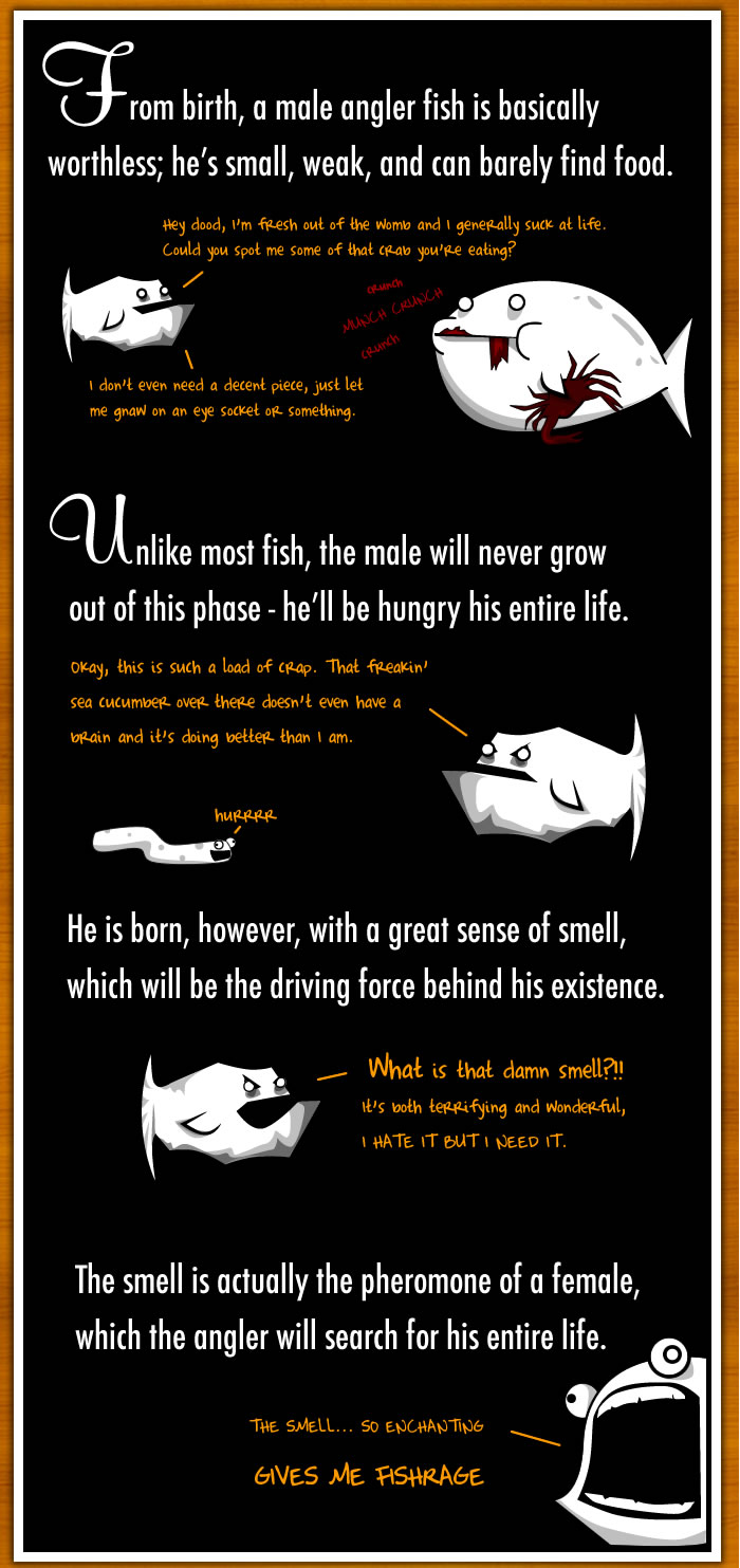 How The Male Angler Fish Gets Completely Screwed - The Oatmeal for Male Angler Fish Vs Female Angler Fish  557ylc