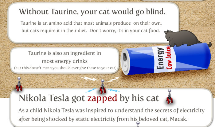 Joke About Cat Vs Internet 6