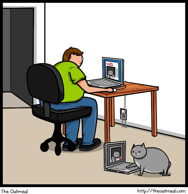 Cat V's The Internet 11