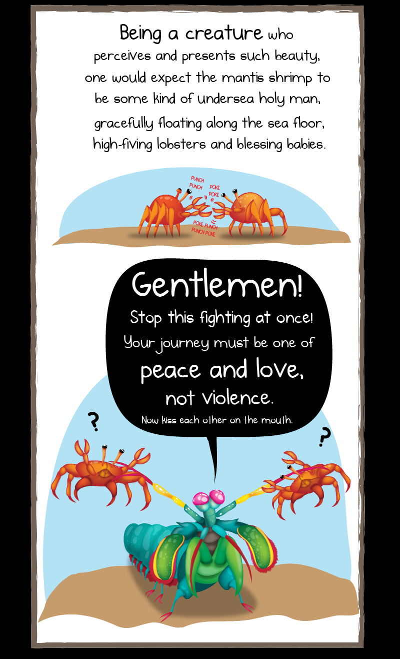 why the mantis shrimp is my new favorite animal the oatmeal