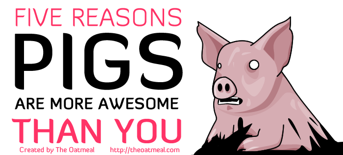 5 reasons pigs are better than you