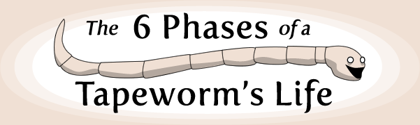 The 6 Phases Of A Tapeworm S Life The Oatmeal