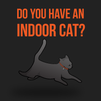 Do you have an indoor cat?