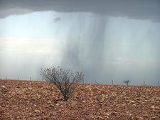 Patchy Rain From Thunderstorm Over Stony Downs Of Sturt National Park