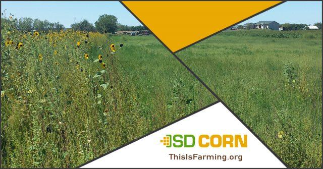 Improve Soils