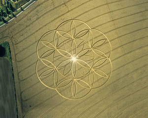 Crop Circle (Flower of Life)